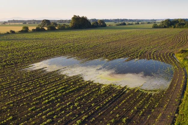 Scène rurale avec un champ inondé dans la nature estivale depuis un drone