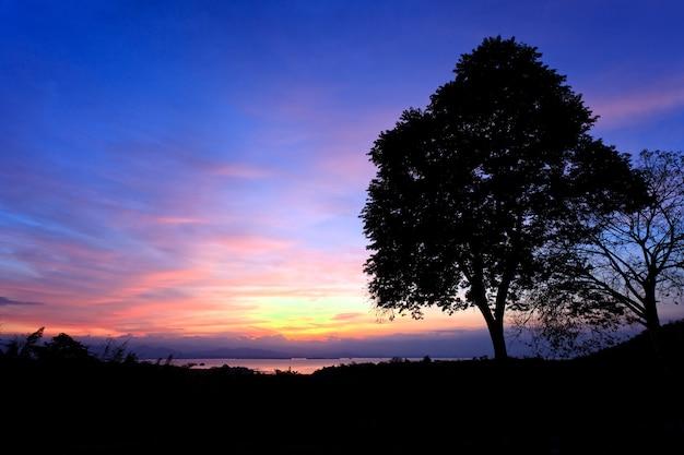 Scène de silhouette de lever de soleil derrière l'arbre