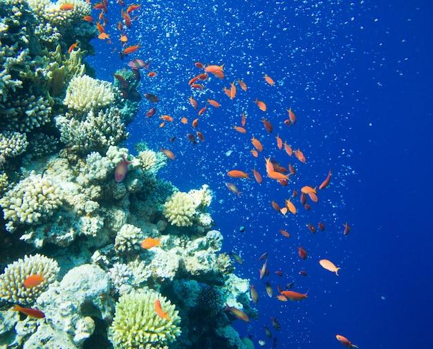 Scène sous-marine tranquille avec espace copie
