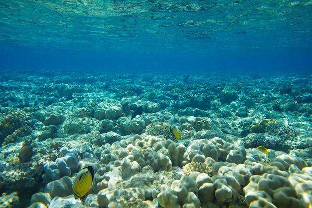 Scène sous-marine tranquille
