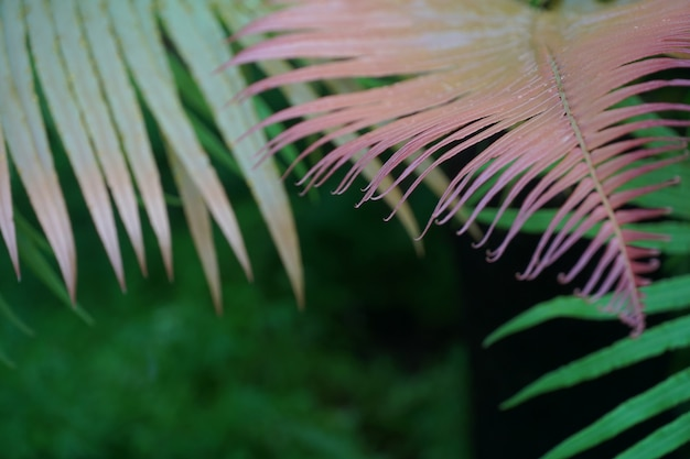 Scène tropicale avec feuille de fougère