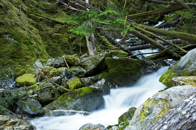 Scenic montana mossy creek