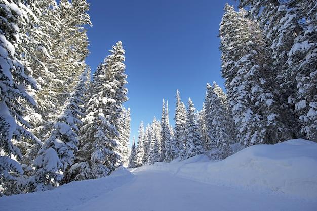 Scenic winter forest road