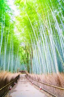 Scénique asiatique arbre nature kyoto