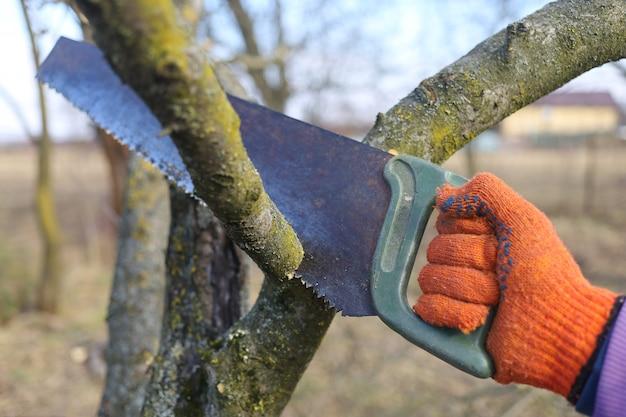 La scie coupe les branches dans le jardin et travaille au printemps