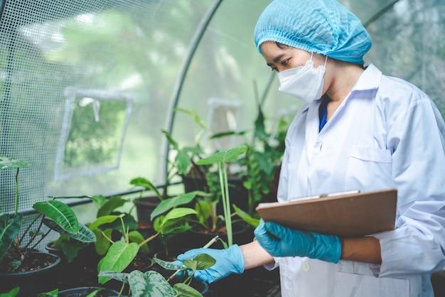 Scientifique en biologie travaillant à la recherche d'une plante de croissance en serre agricole, de la technologie des sciences biologiques de la nature ou de la biotechnologie en laboratoire de botanique, des personnes examinant des légumes pour l'industrie alimentaire