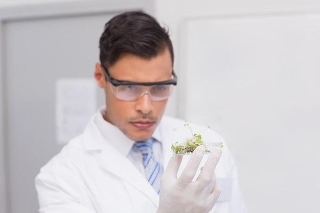 Scientifique tenant une boîte de pétri avec des tests de plantes