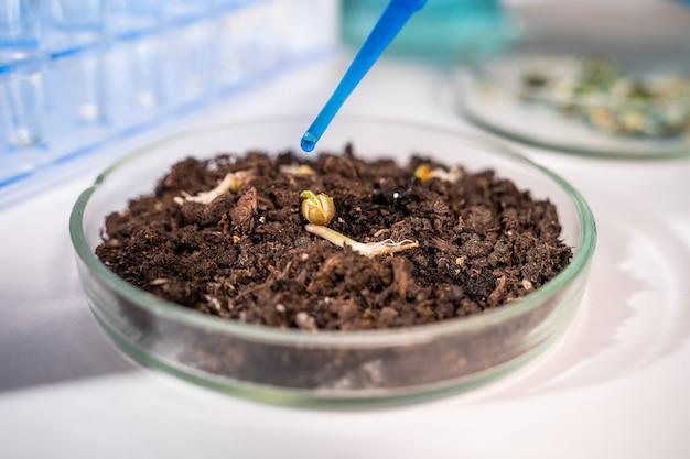 Scientifique travaillant avec des plantes et des semences d'ogm en laboratoire biologique.