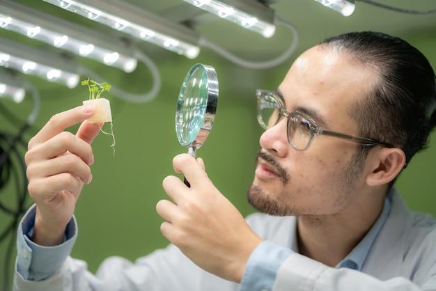 Scientifique travaillant à la recherche sur les plantes vertes agricoles dans une serre de laboratoire de sciences biologiques, test d'expérimentation biologique pour la biotechnologie alimentaire médicale, biologiste de l'écologie botanique dans la croissance agricole