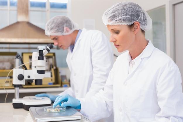Des scientifiques concentrés travaillant avec des graines
