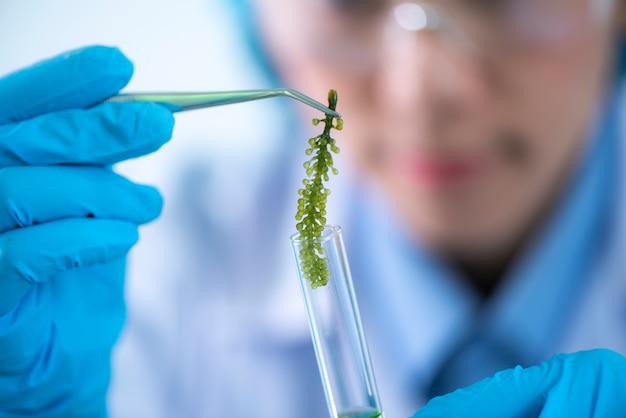 Les scientifiques développent des recherches sur les algues