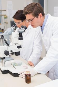 Scientifiques examinant attentivement dans des microscopes