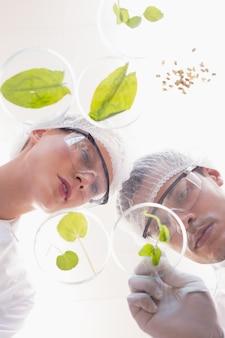 Scientifiques examinant les feuilles dans une boîte de pétri