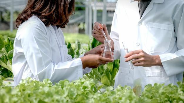 Les scientifiques ont examiné la qualité de la salade de légumes biologiques et de la laitue de la ferme hydroponique des agriculteurs