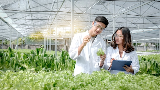 Les scientifiques ont examiné la qualité de la salade de légumes biologiques et de la laitue de la ferme hydroponique et les ont enregistrées dans le presse-papiers