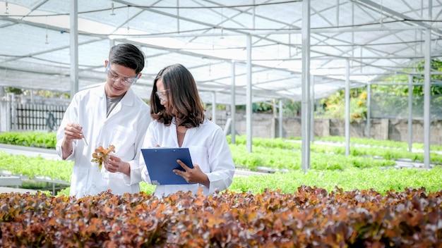 Les scientifiques ont examiné la qualité de la salade de légumes biologiques et de la laitue de la ferme hydroponique