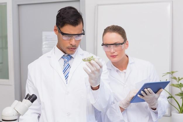 Scientifiques tenant une boîte de pétri avec des tests de plantes