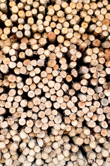 Scier du bois préparé pour la saison de chauffage d'hiver