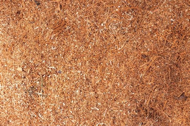Sciure de bois ou poussière de bois texture de fond.