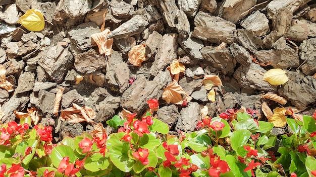 Sciure pour le jardin. texture d'écorce d'arbre gisant sur le sol. fond d'une écorce d'arbre avec de petites fleurs rouges et des feuilles jaunes en automne.