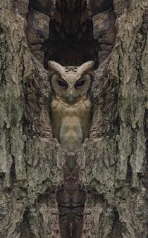 Scops hibou à collier dans un arbre creux, (retouche photo)