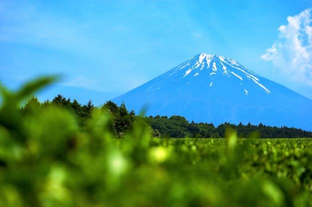 Se concentrer sur la belle montagne fuji
