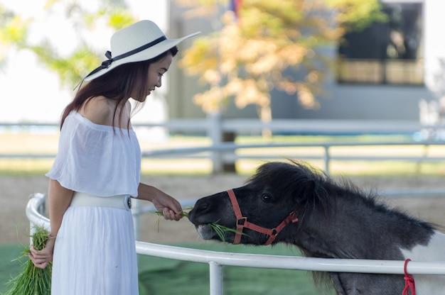 Se détendre avec un cheval nain.