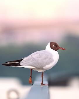 Sea gull est assis sur une clôture près du bord de mer et va voler. espace de copie
