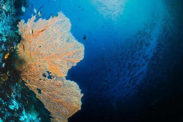 Seafan jaune avec un banc de poisson