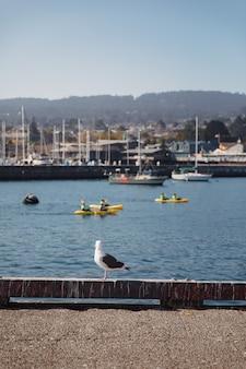 Seagull au port