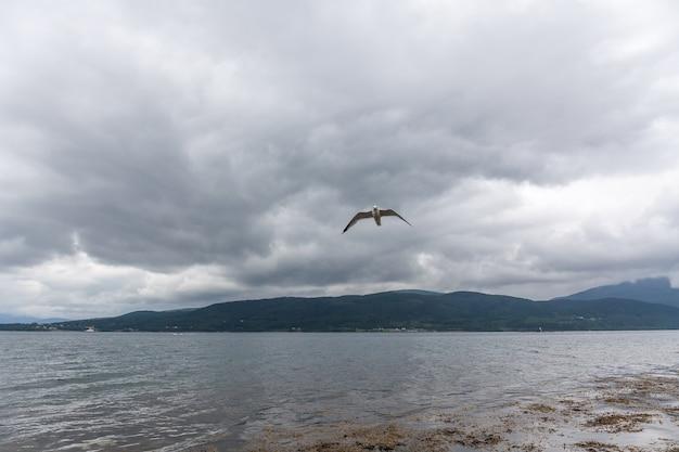 Seagull dans un ciel nuageux. mouette volant dans un ciel nuageux. mouette survolant le fjord