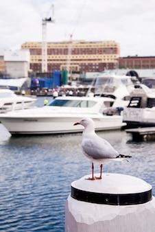 Seagull dans le port