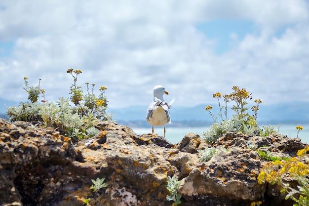 Seagull debout sur des pierres parmi les fleurs jaunes