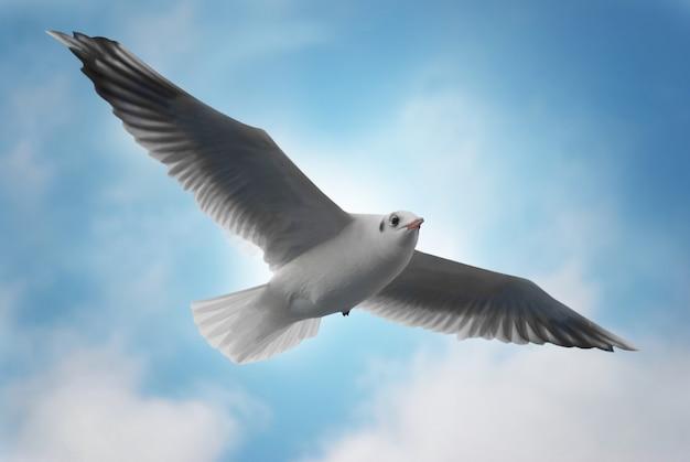 Seagull sur fond bleu.