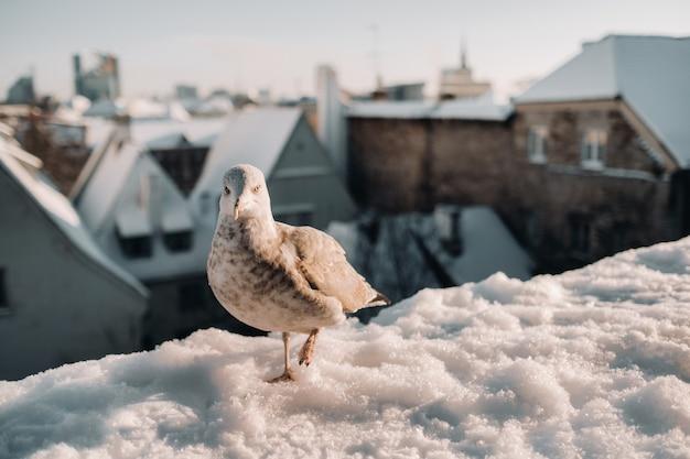 Seagull avec hiver tallinn à l'arrière-plan, l'estonie