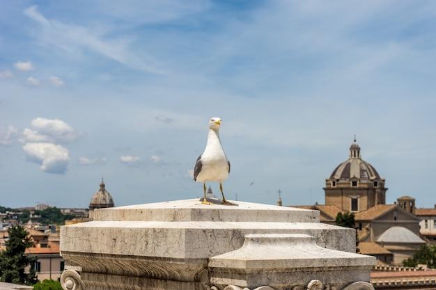 Seagull perché devant un immeuble à rome, italie