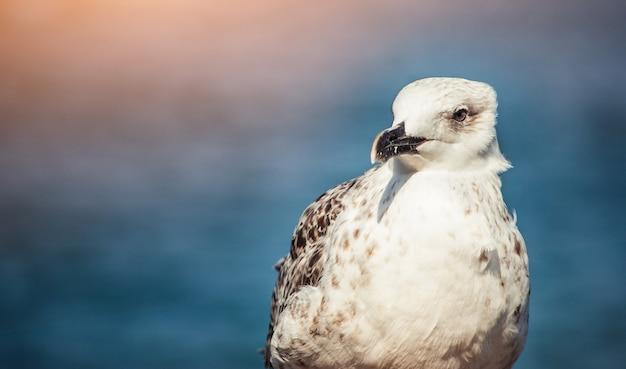 Seagull près de la mer