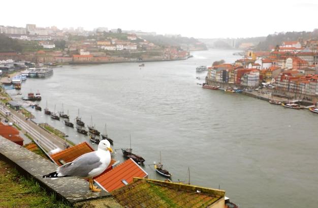 Seagull et vue sur le fleuve douro à porto