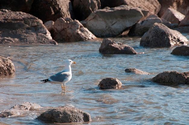 Seaguls à la plage