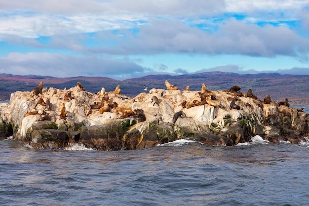 Seal island près d'ushuaia