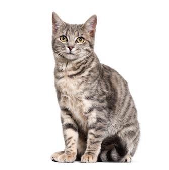 Séance de chat de race mixte