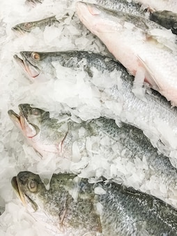 Seaperch fish ou white snapper fish