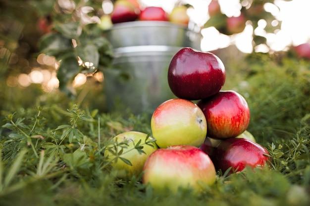 Seau plein de pommes mûres est dans l'herbe du jardin dans les rayons du coucher du soleil