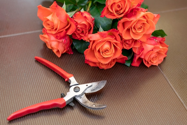 Sécateur de gros plan avec des roses rouges élégantes