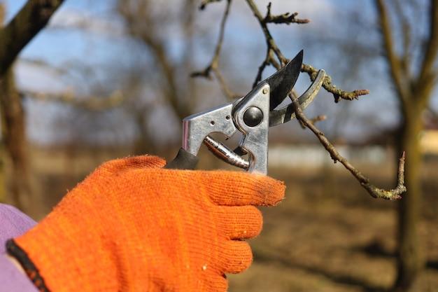 Les sécateurs coupent des branches dans le jardin et travaillent au printemps