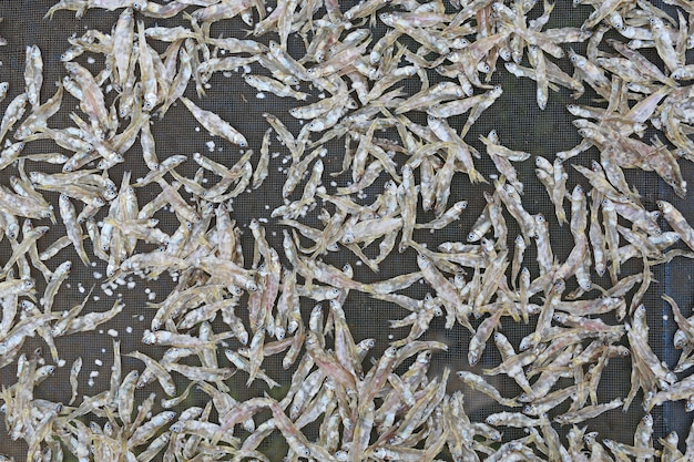 Séchage de petits poissons