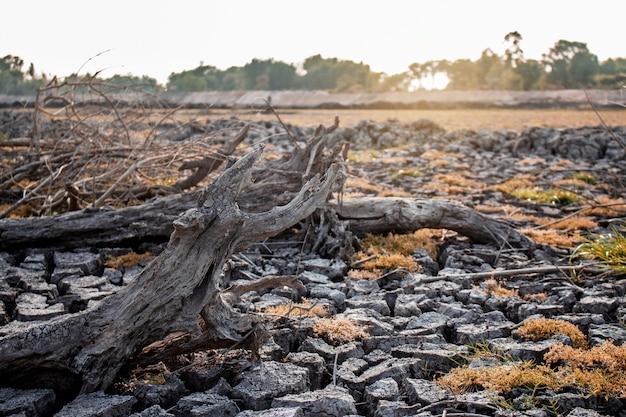Sèche le bois d'arbre sur le terrain en été au soleil.