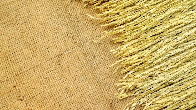 Sécher les épis de riz thaïlandais sur un sac brun.