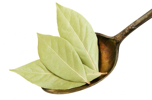 Sécher les feuilles de laurier dans une vieille cuillère sur un fond blanc.