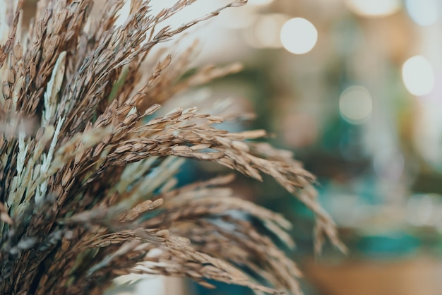 Sécher le riz sur une table en bois et décorer au café.